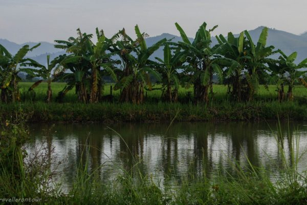 Rice fields, little streams and palm trees - all adds up to a beautiful area