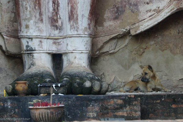 Dog guarding the statues