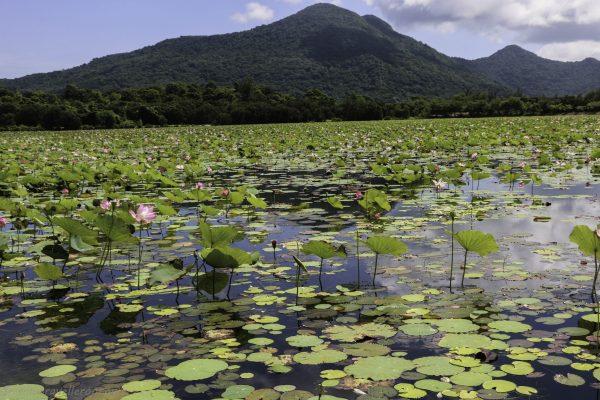 The Lotus lake