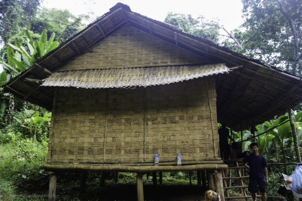 The jungle accomodation