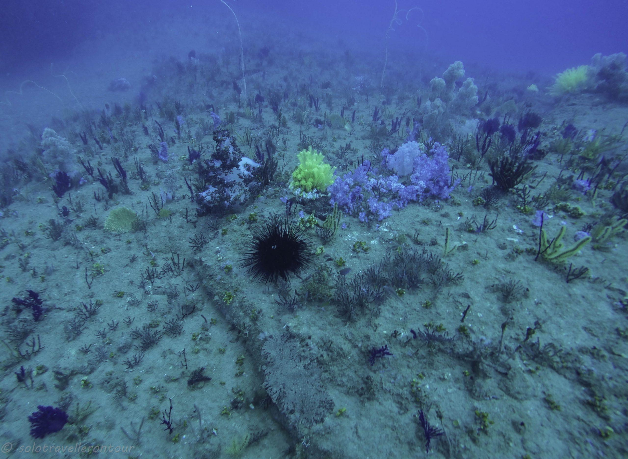 4. Diving in Vietnam Part 1 – Cham Island