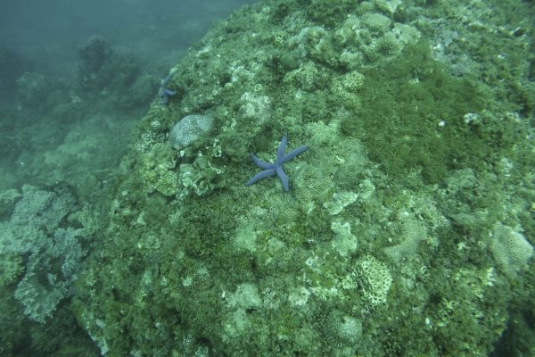 Sea stars and corals