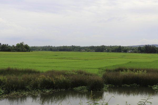 Beautoful rice paddies