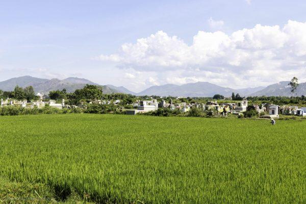 Cemetery inside a rice field
