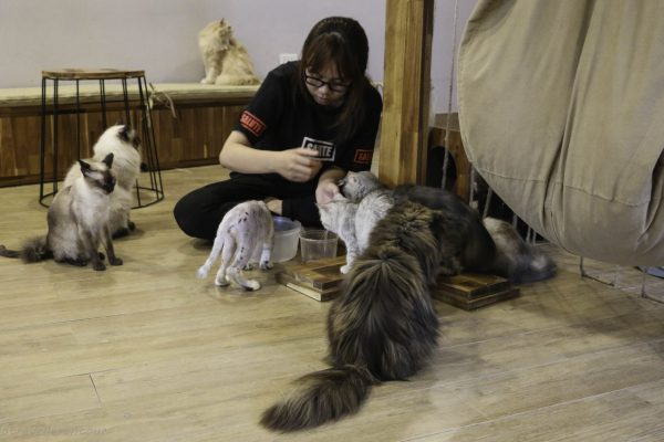 The Ailu Cat Cafe