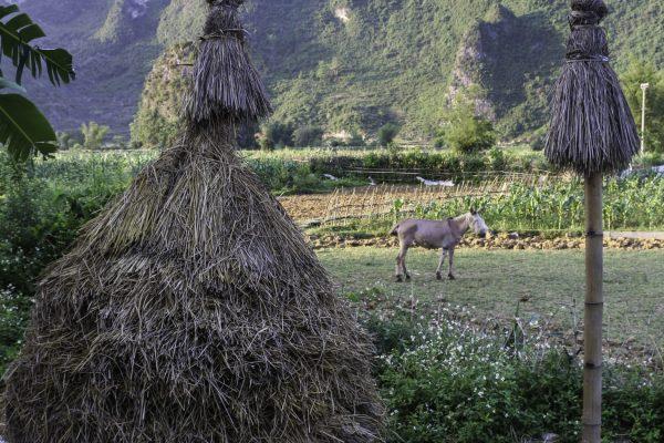 Creatvie haystacks
