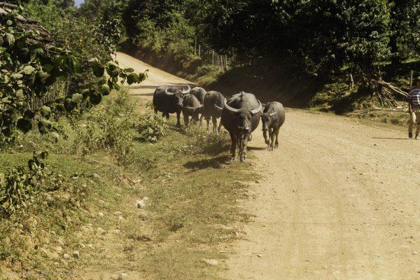 Enjoying rural Laos