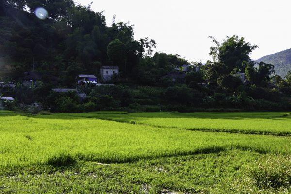 Rice fields inside Yen Minh