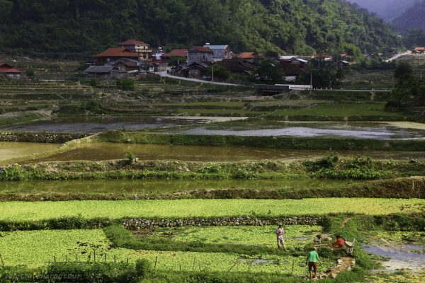 Locals of a village working hard on the fields