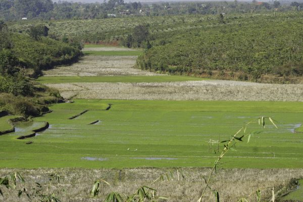 Lovley rice paddies