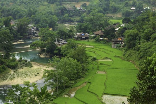 A little village surrounded by rice fields