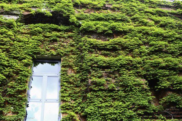 The walls of the Serenadenhof