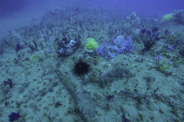 Diving site near Cham Islands
