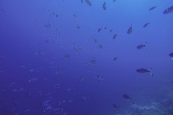 Swimming through a school of fish