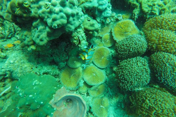 Beautiful corals and fish everywhere