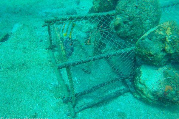 The fish trap...