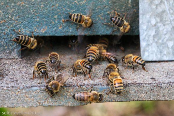 The main inhabitants of the farm