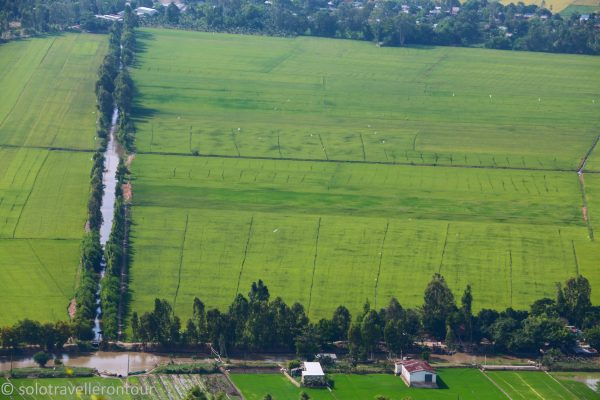 The view of the rice paddies with the different green - stunning