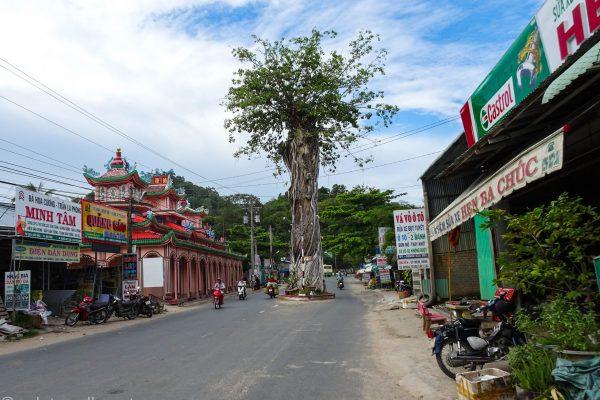 The Grievous Tree