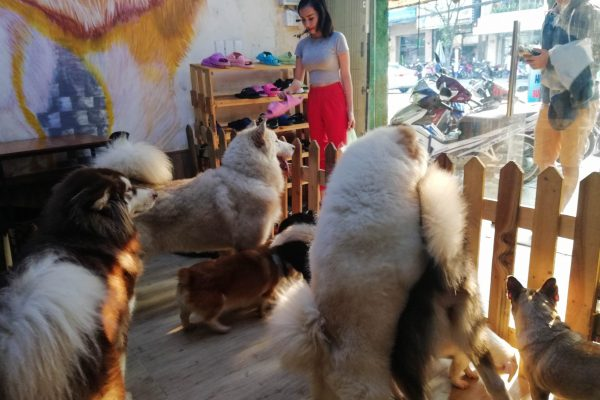 The dogs got very excited when the owner arrived