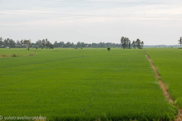 Enjoying the dry sky and the strong green colour of a rice field