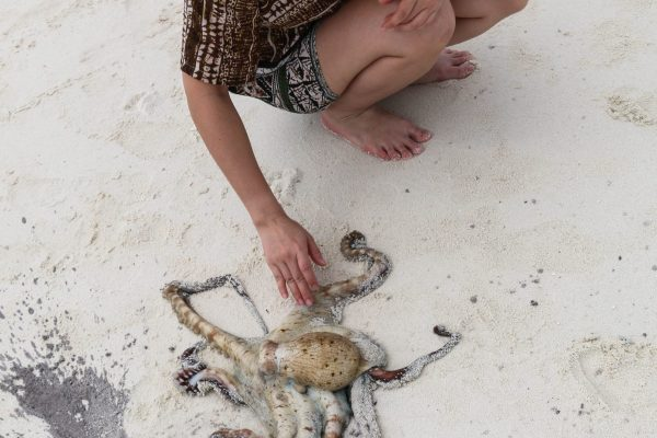 Hand caught octopus