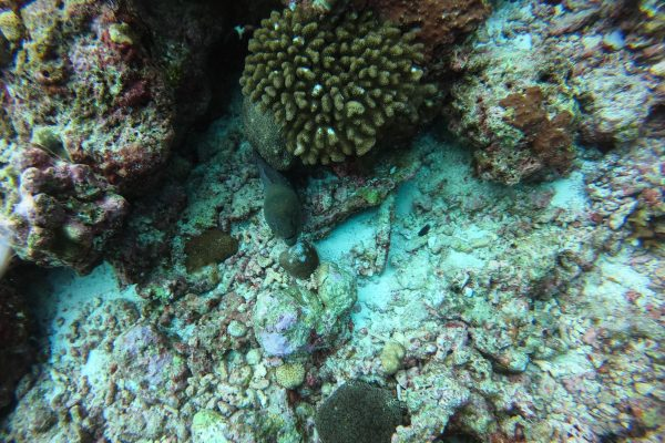 First spot of the day - a moray eel
