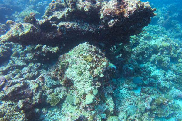 More small fish sighting