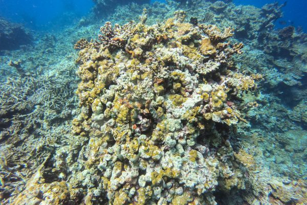Corals and animals